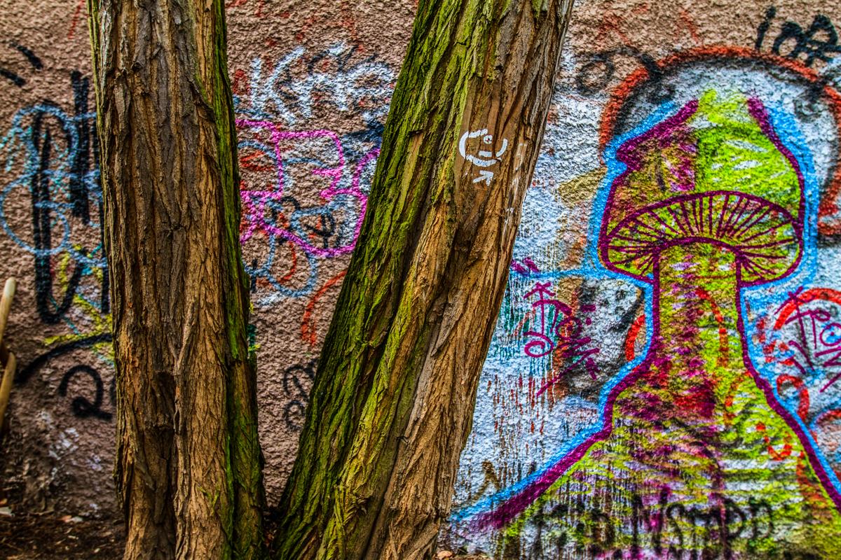 Baum vor Wandgraffiti