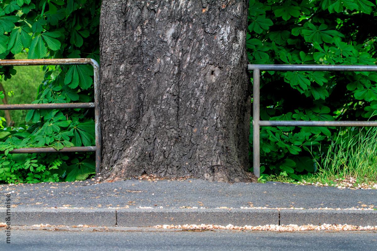 Stadtbaum #04