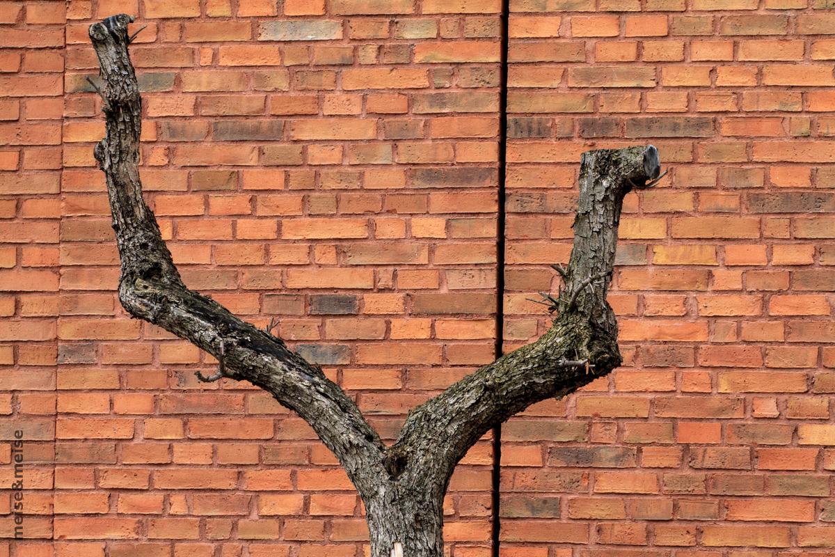 Stadtbaum #05