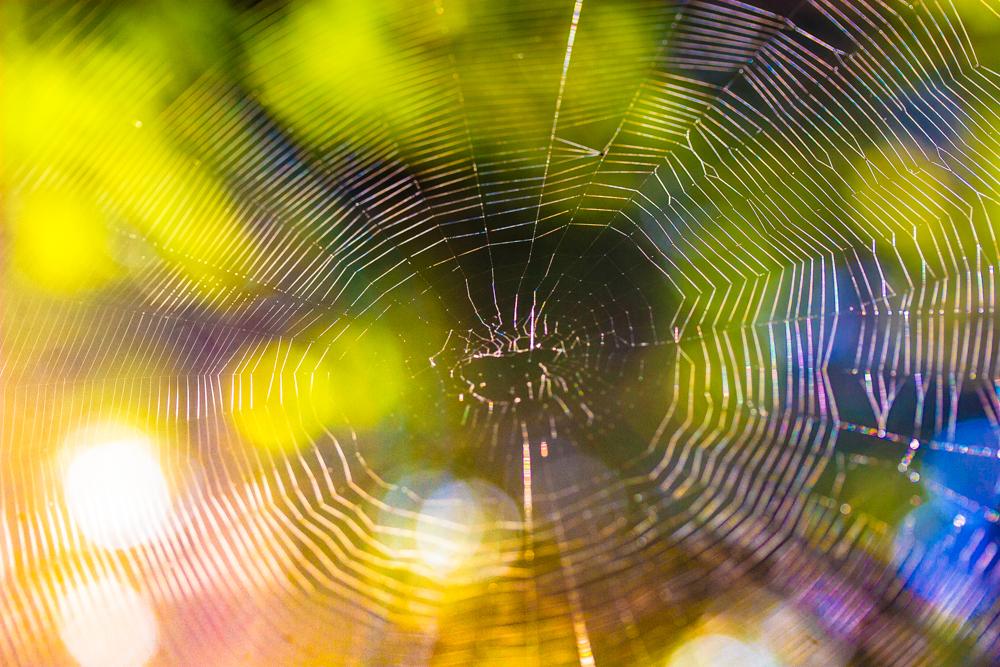 Spinnennnetz