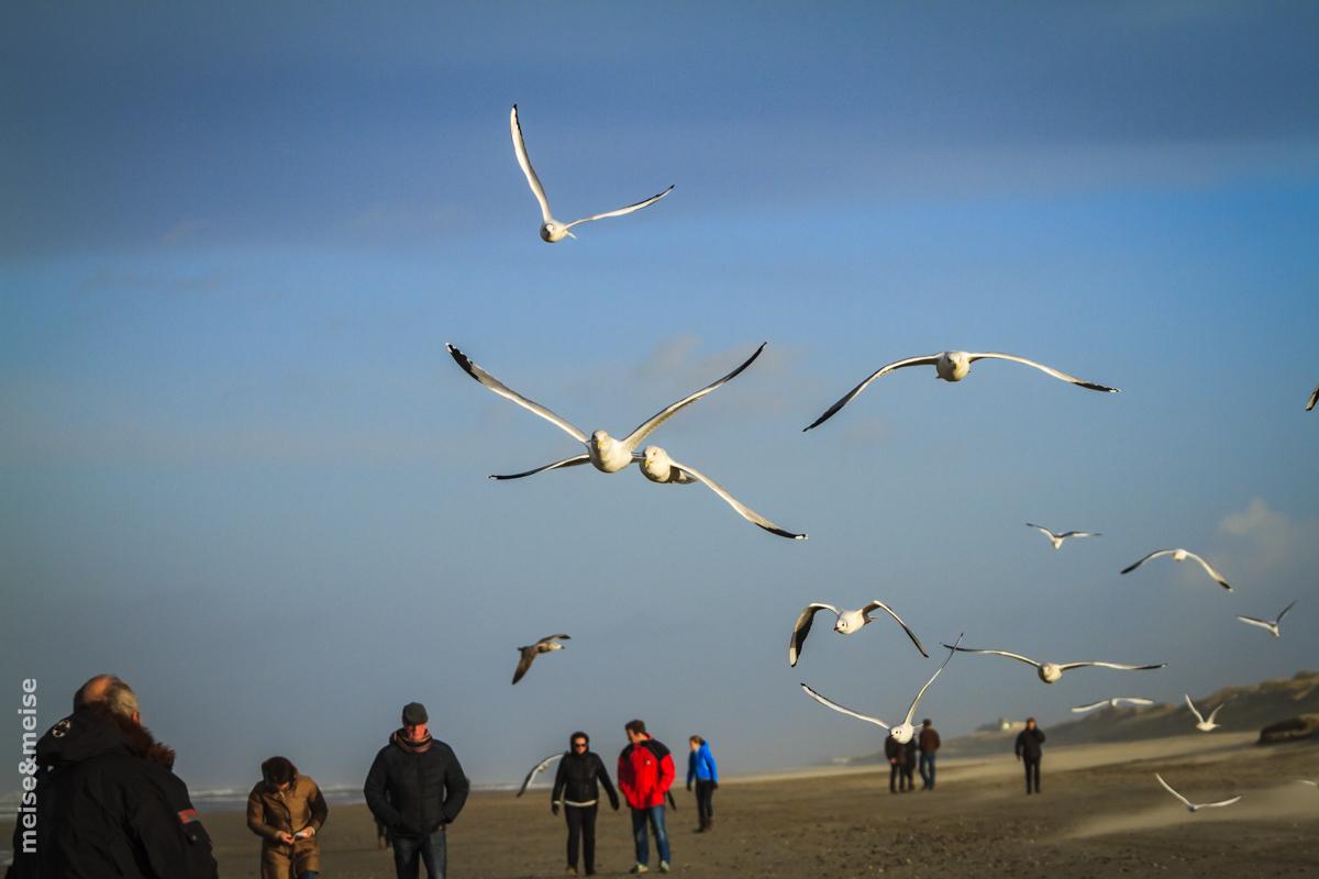 Strand, Egmond aan Zee 2016